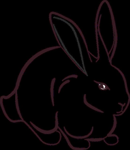 rabbit-1012595_640